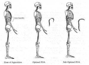 Postural Restoration Institute (PRI) - Zone of Apposiion
