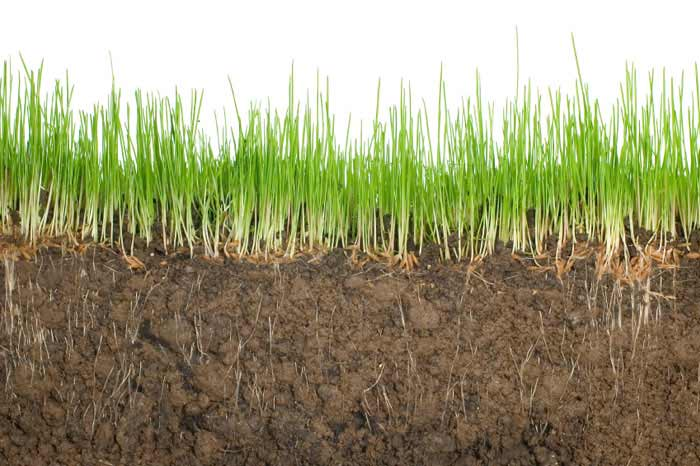 As Gray Cook says, it's often times more about having the right soil before you plant the seed