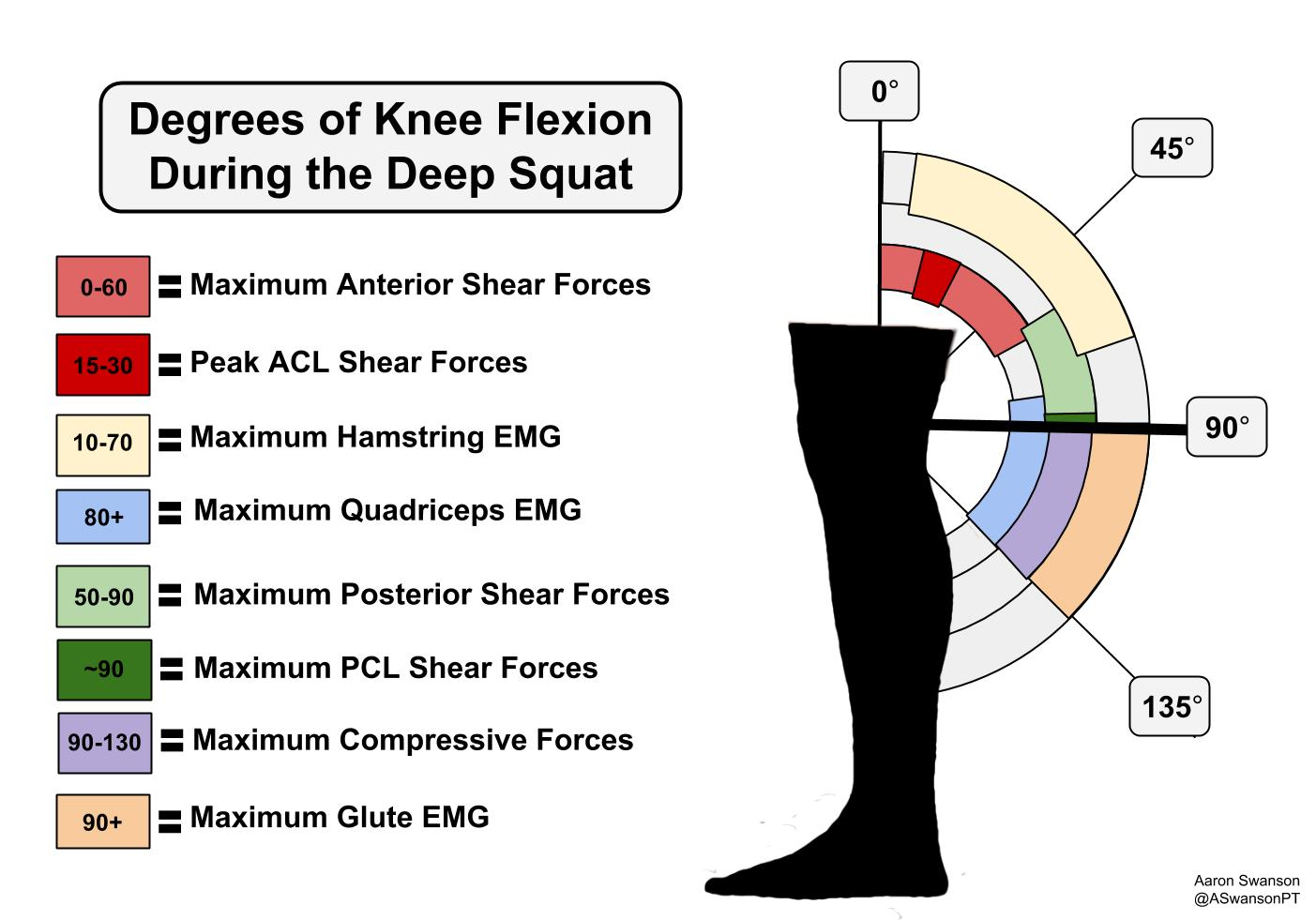 Squat forces and muscle activity